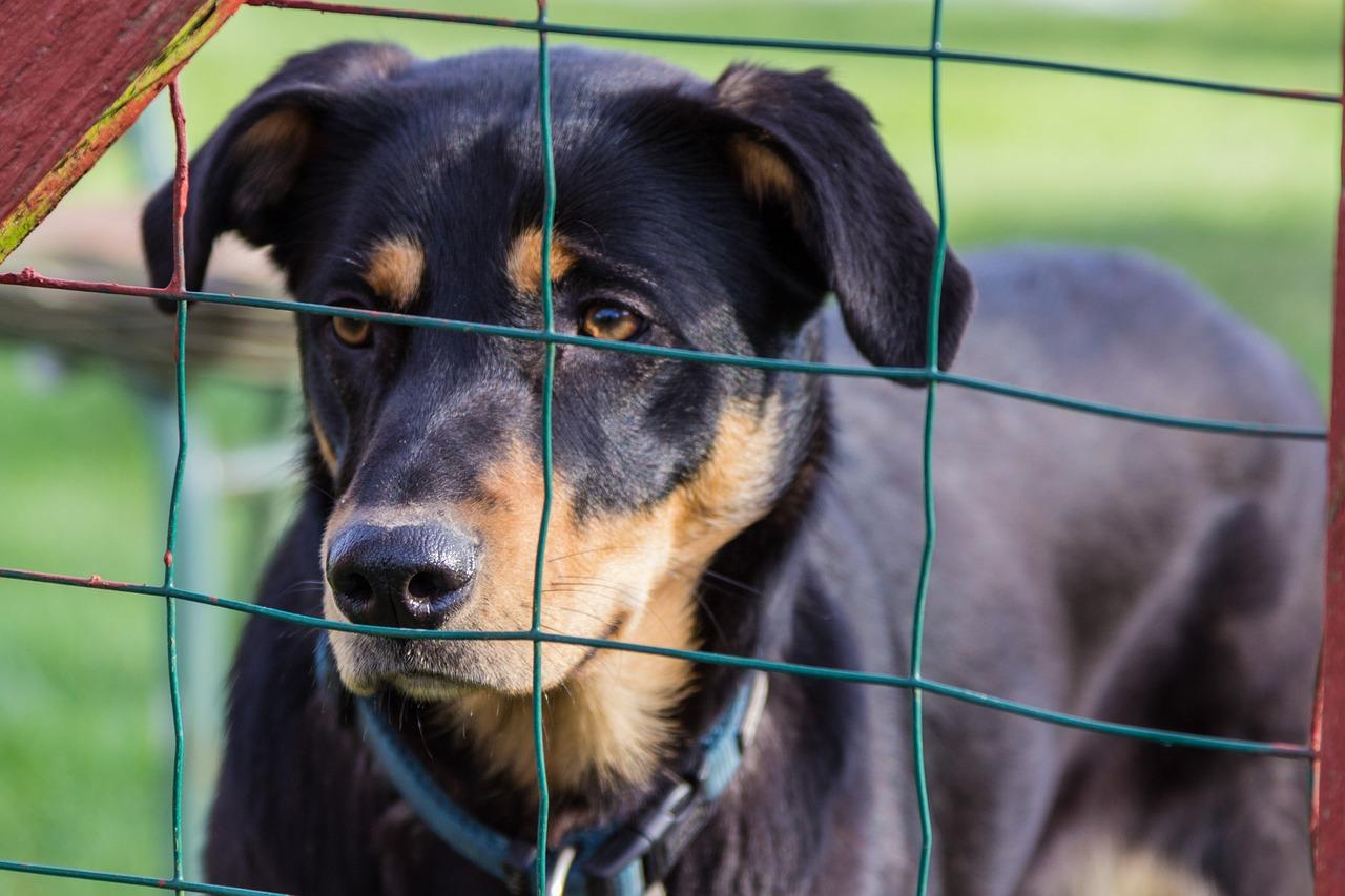 Rusza wielkanocna zbiórka dla zwierząt w ETC Swarzędz